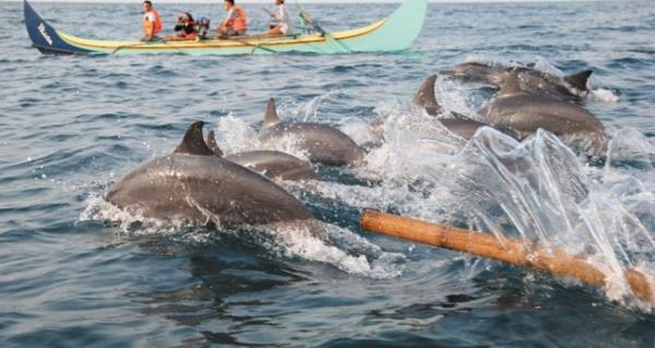 Bermain bersama aneka lumba-lumba di Lampung