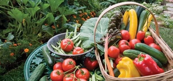gardening-berkebun-rumahan